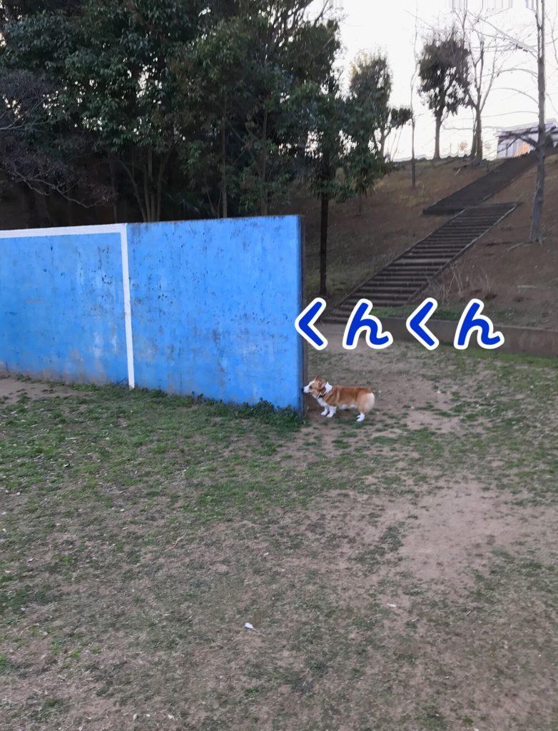 この青い壁なんだろう?クンクン