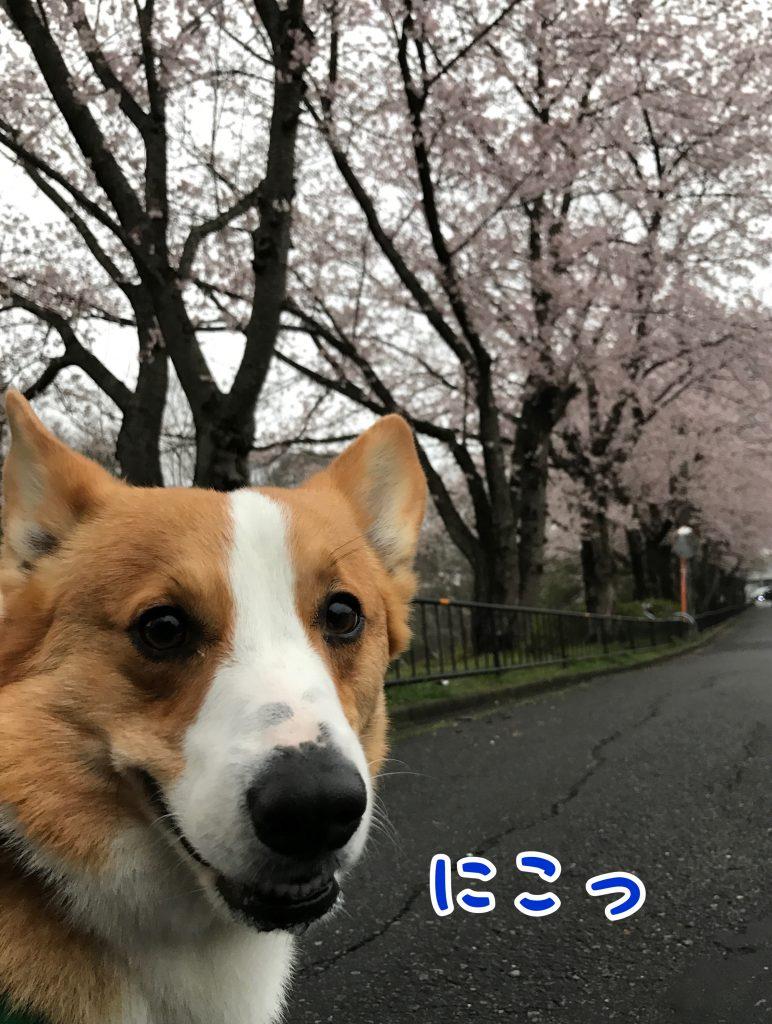桜並木に満足したのか笑顔になったはるさん