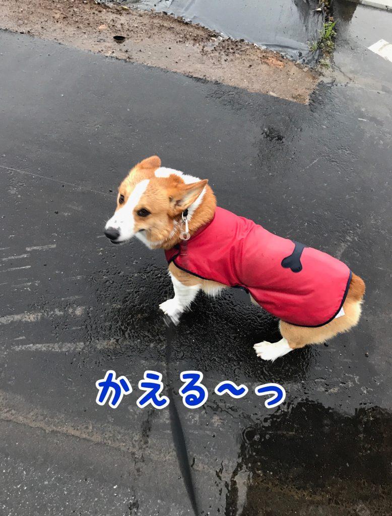 今日は雨がいっぱい降ってるから早く帰ろうよ