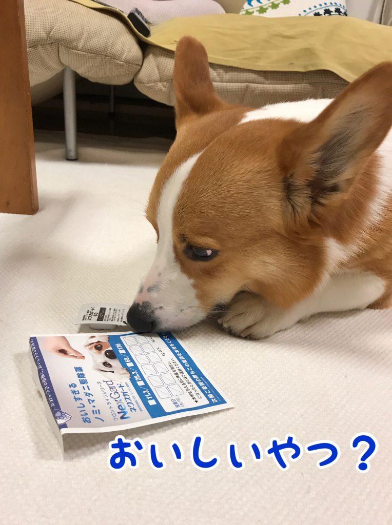 動物病院からもらってきたお薬が気になっているはるさん