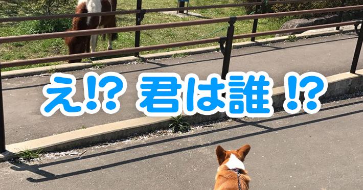 公園で初めて馬を見たコーギーの反応は?