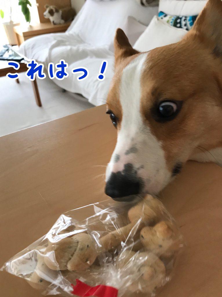 これはウマウマのわんわんパンじゃないですか〜!はるさん目が怖いです