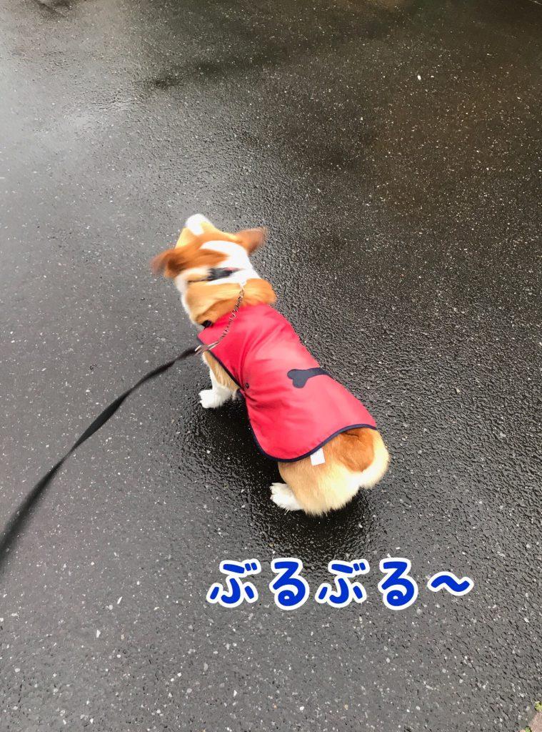 いっぱい雨が降ってるじょ!ブルブル!