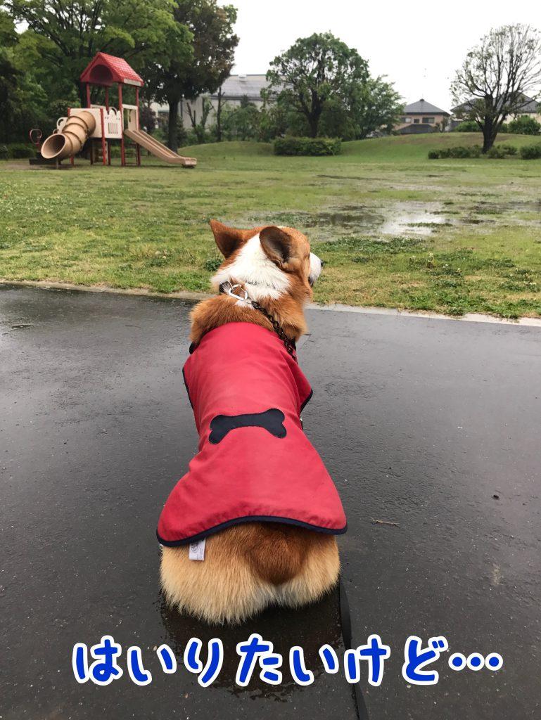 公園も水溜りだらけだから今日は入れないね