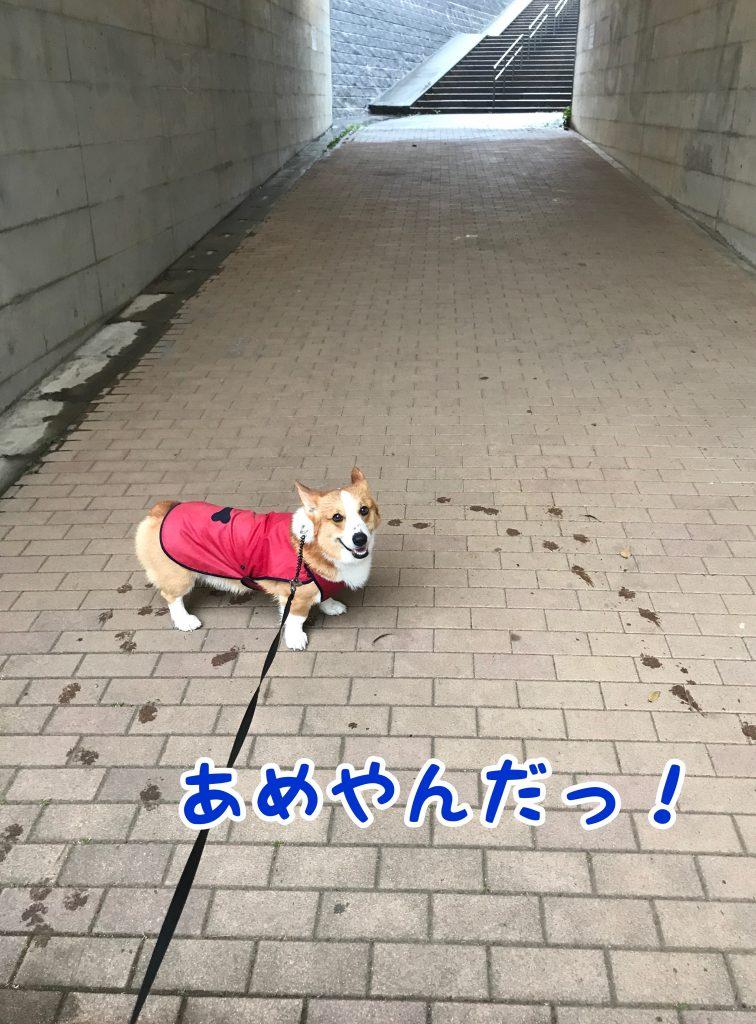雨止んだ!と言ってるはるさん。違うよここはトンネルだよ