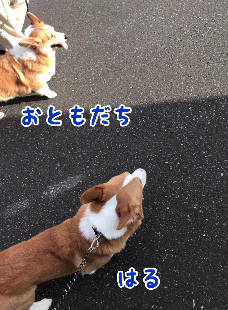 お散歩の途中でお友達に会ったよ