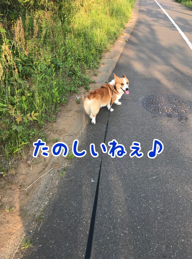今日も笑顔のはるさん。お散歩楽しいね