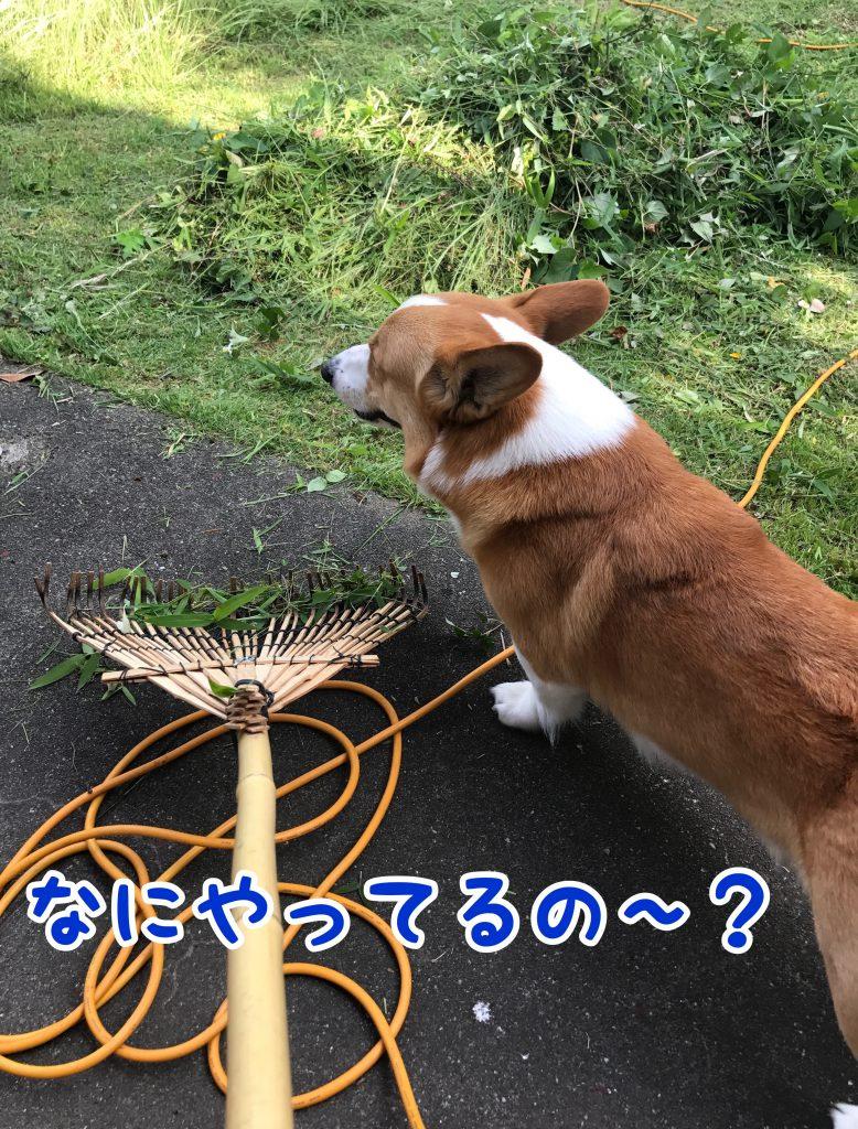 何してるの?はるさんも草刈りお手伝いする?