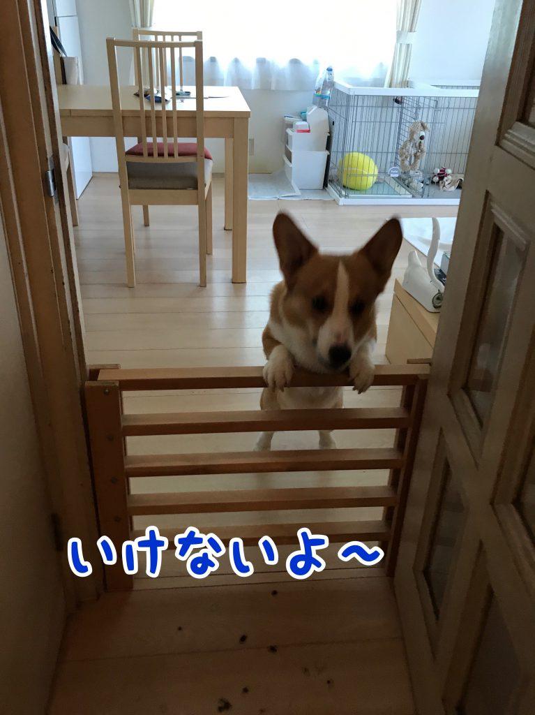 う〜ん、行けないよ〜