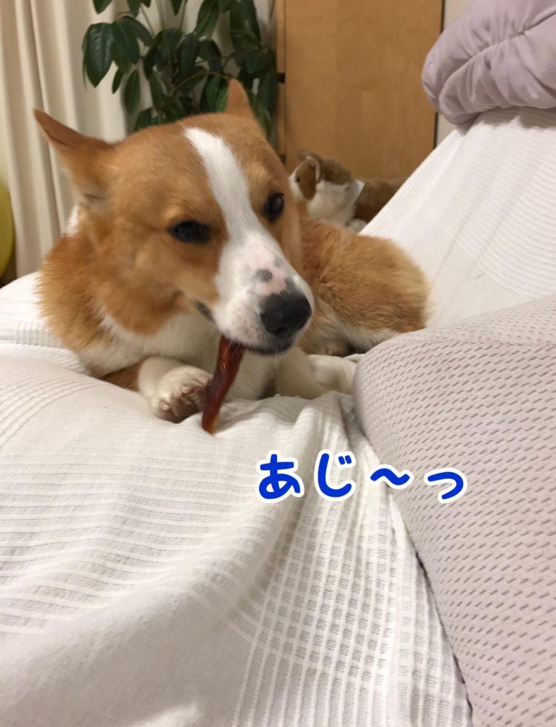 ソファーの上で食べるササミロールはうまいじぇ!