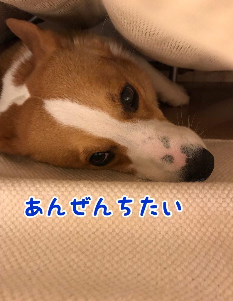 ソファーの下によく入って寝ています