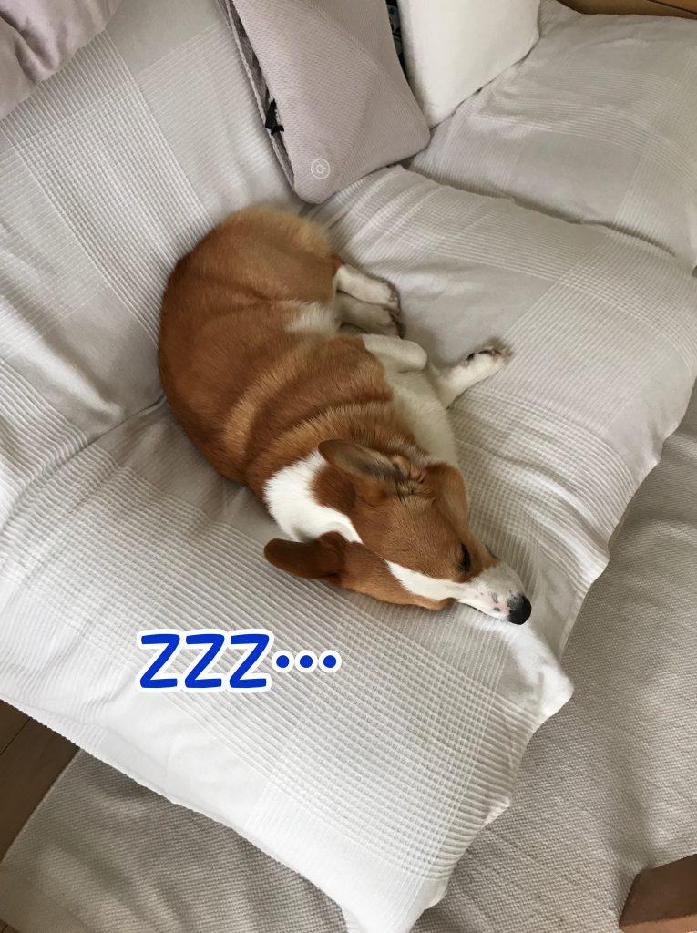眠くなってきちゃった