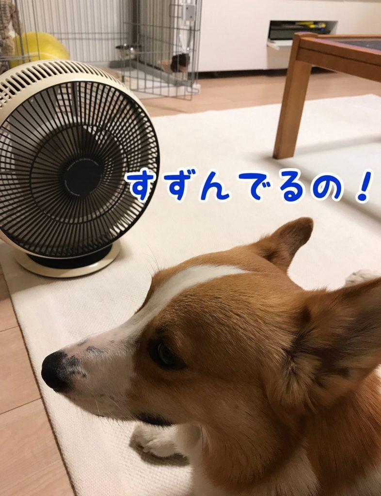 僕は暑いから涼んでるんだ!