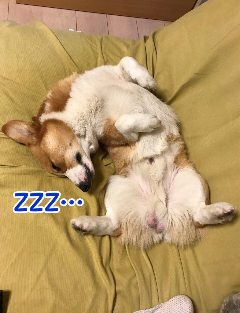 涼しくなって仰向けになって寝ていました