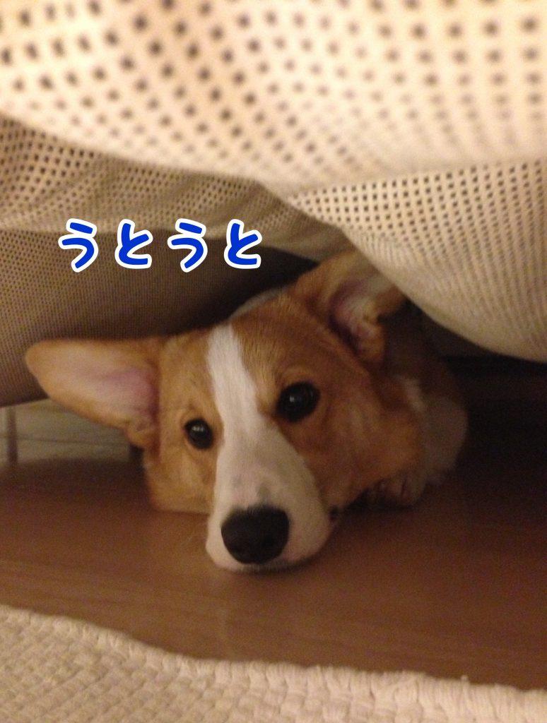 ソファーの下はヒンヤリして気持ちいいね