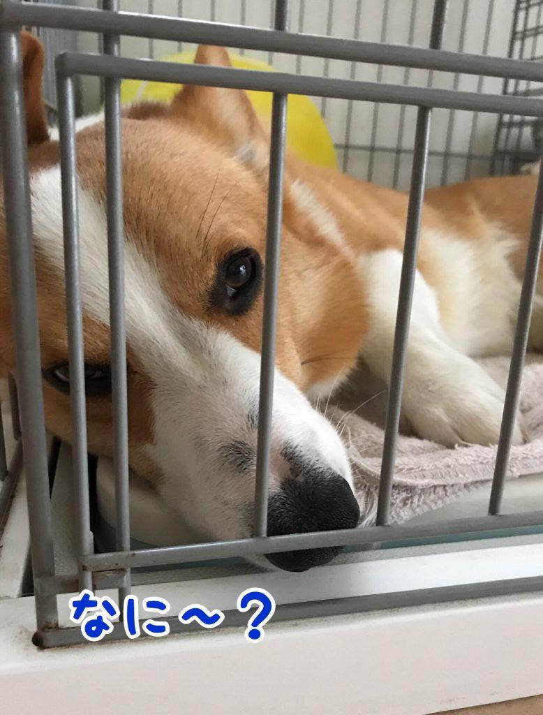 なぁに?僕眠いんだけどぉ〜