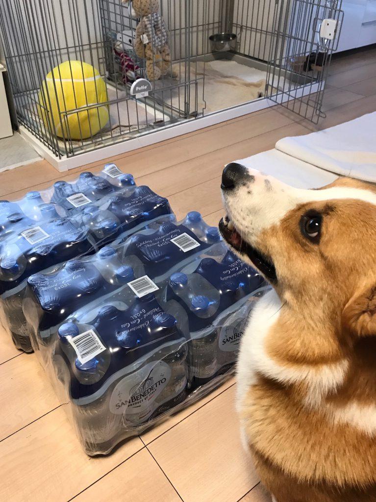 コストコで買ってきた炭酸水とコーギー