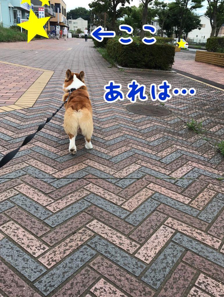 あそこを歩いてるのは・・きっと・・