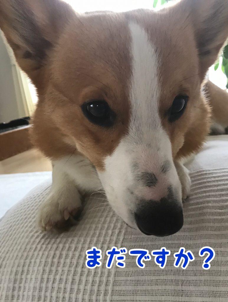 お散歩まだ行かないんですか?