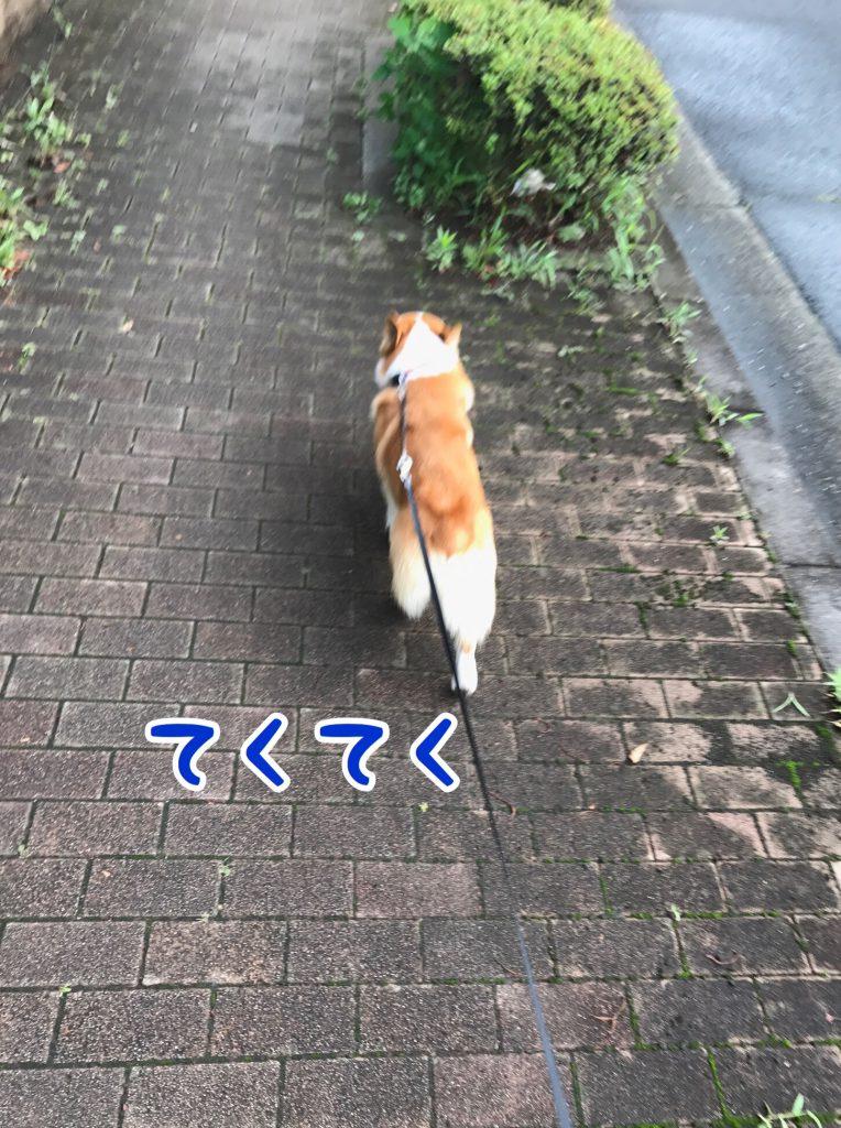 今日も元気にテクテクお散歩です