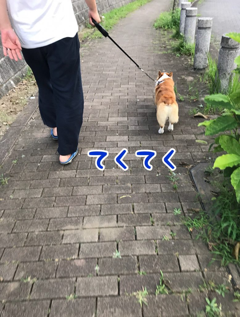 今日も元気にテクテクお散歩です。
