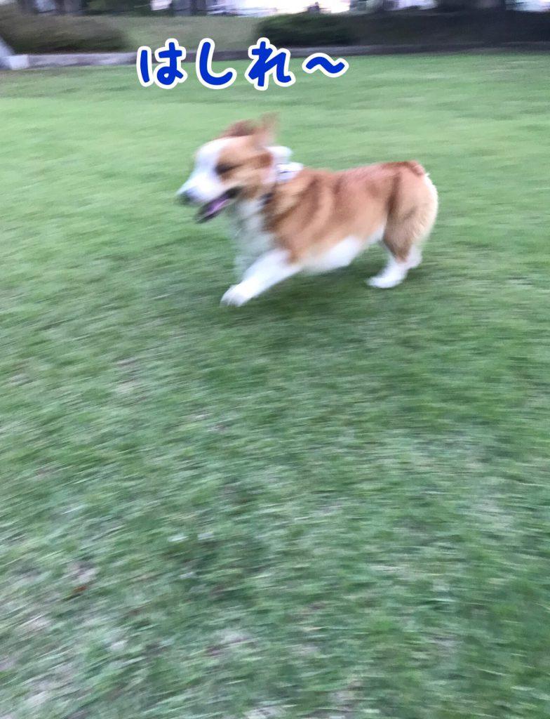 やったー!走っちゃえ!