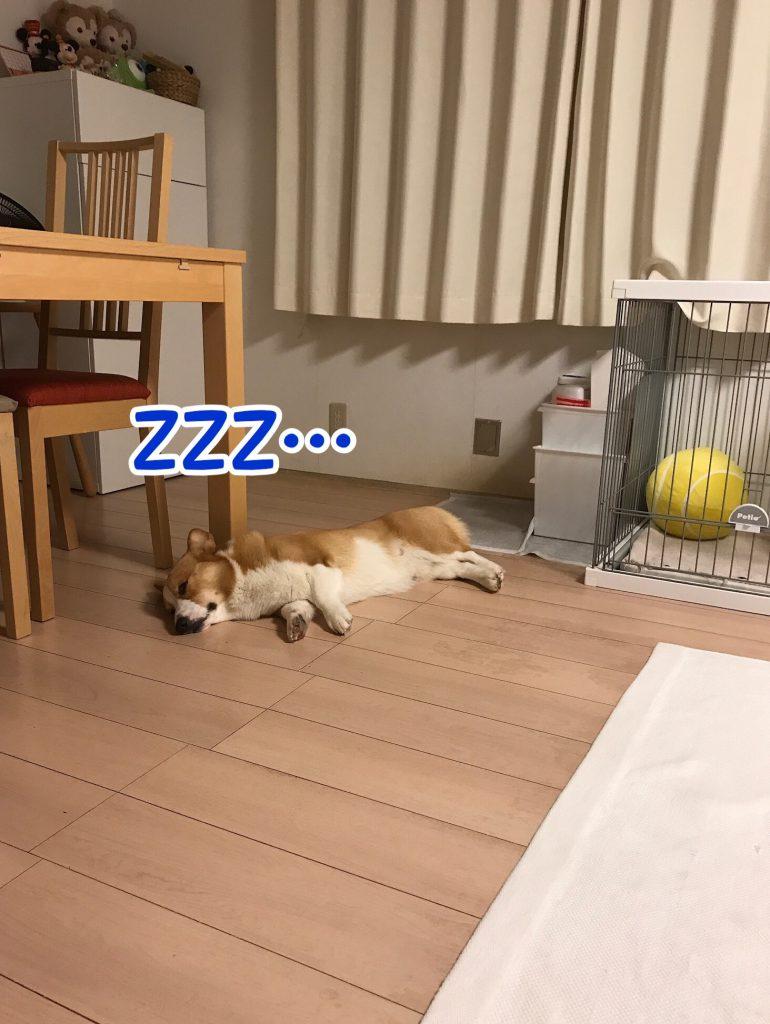 ちょっと移動してまた寝ています