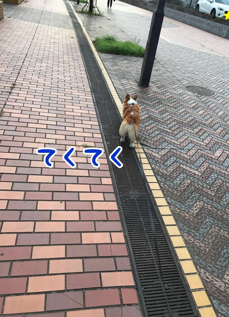 今日も元気にテクテクお散歩です!