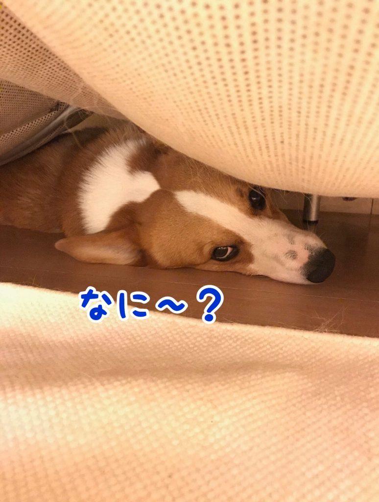 ソファーの下でくつろいでいるはるさん