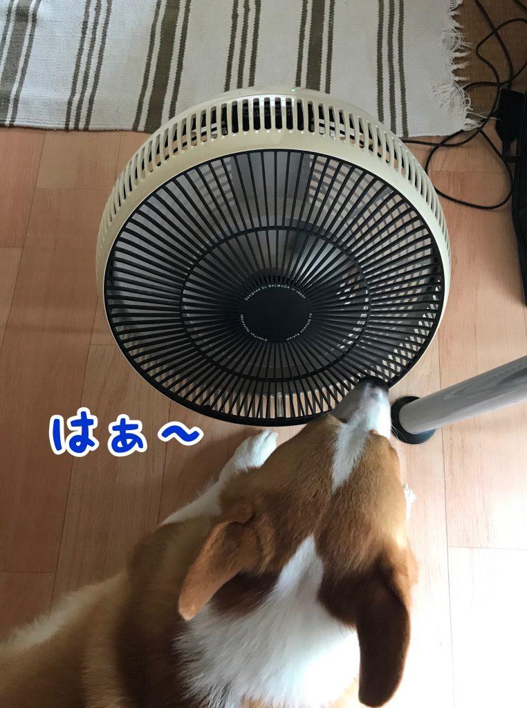 はー涼しいなぁ〜