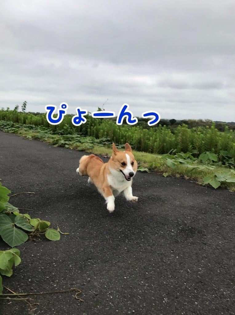 またまたぴょ〜んっ!