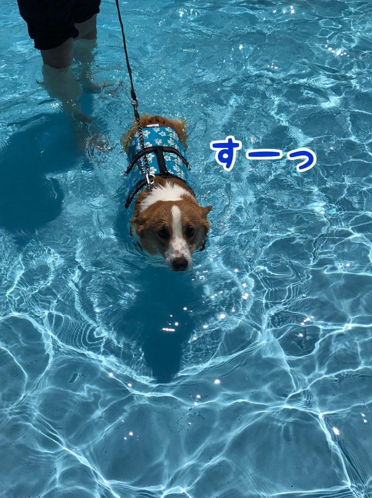 スーっと泳ぎ始めたはるさん
