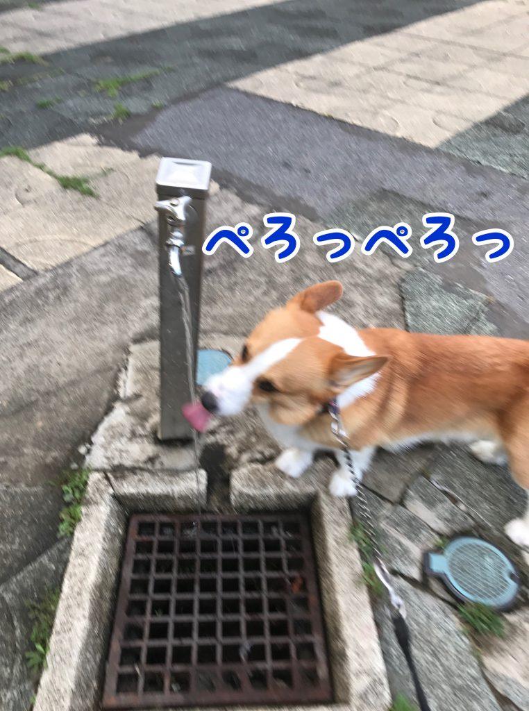 こまめな水分補給は大切だじょ