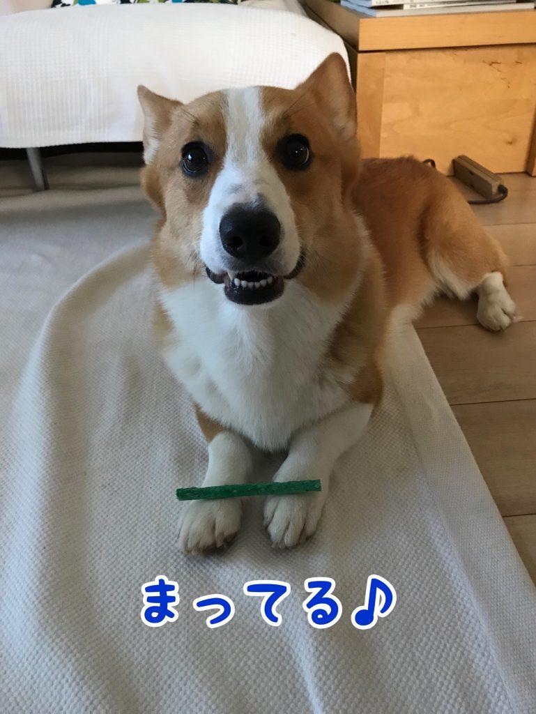 歯磨きガムを両手に乗せられたはるさん