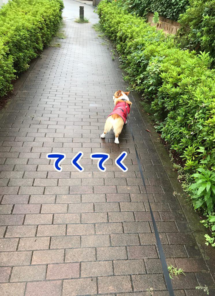 雨上がりのお散歩テクテクです