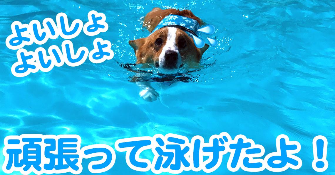 はるさん頑張って泳げるようになりました