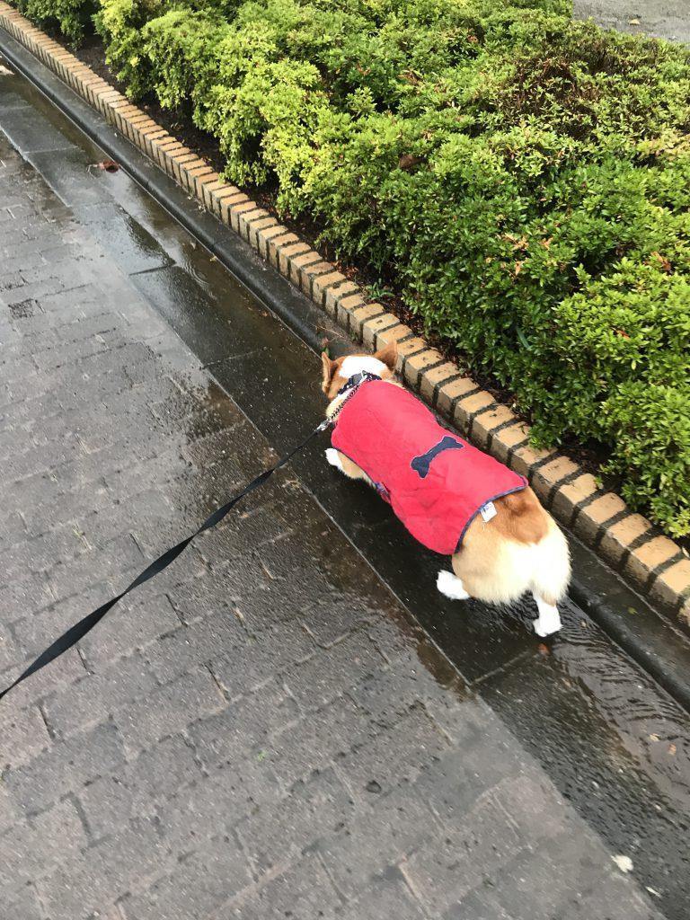 雨の中お散歩行くじょ