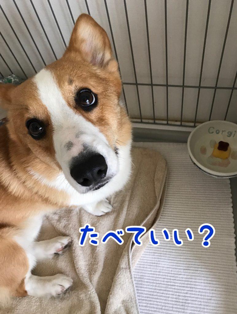 これ食べていいの?
