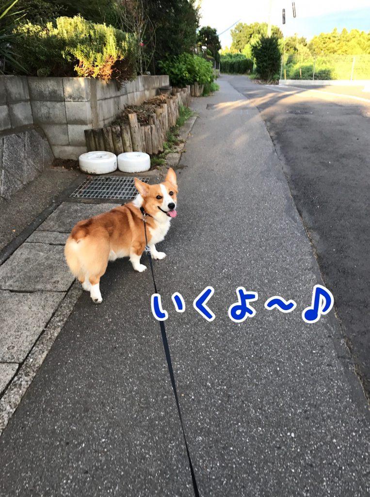 お散歩行くよ!