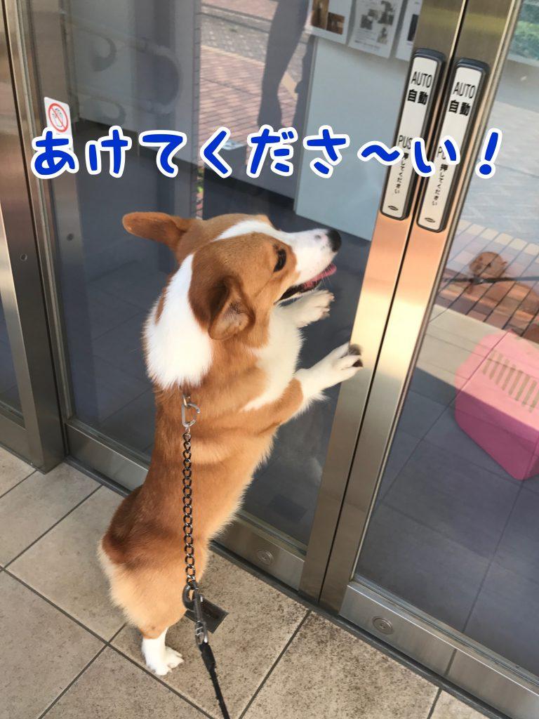 開けてくださ〜い