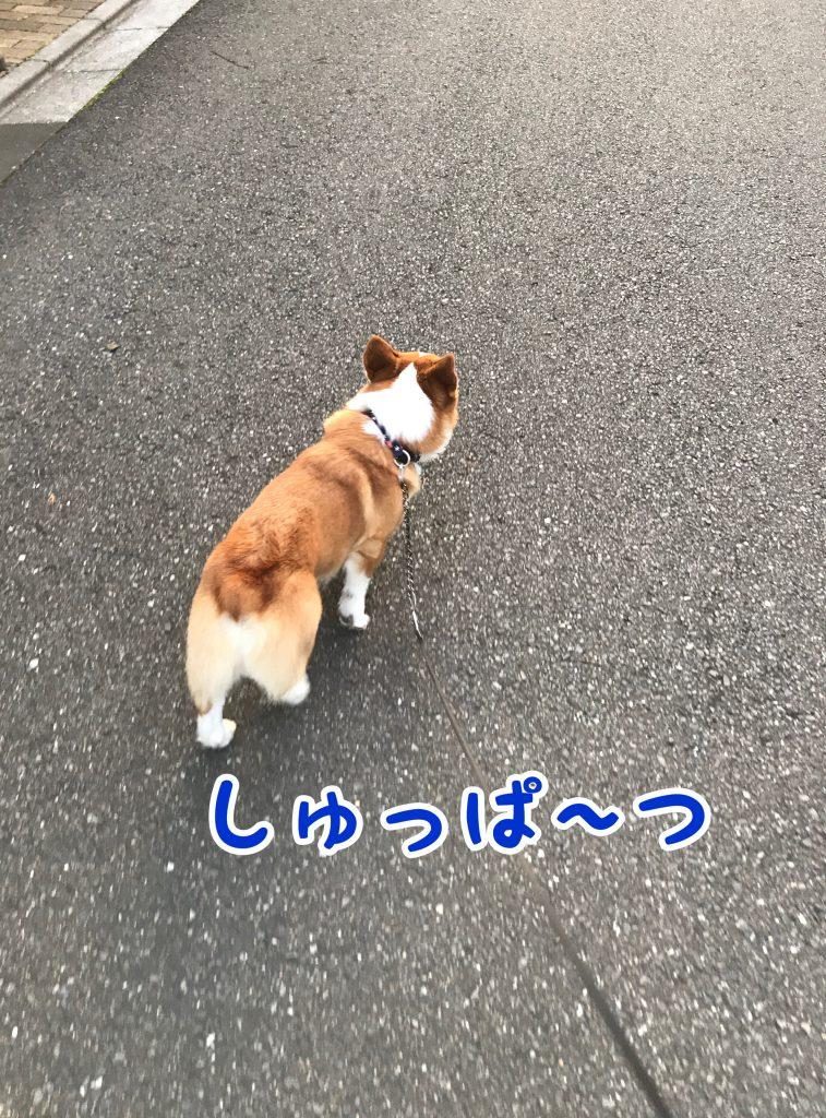 お散歩出発でし