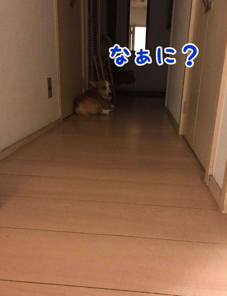 なあにぃ?