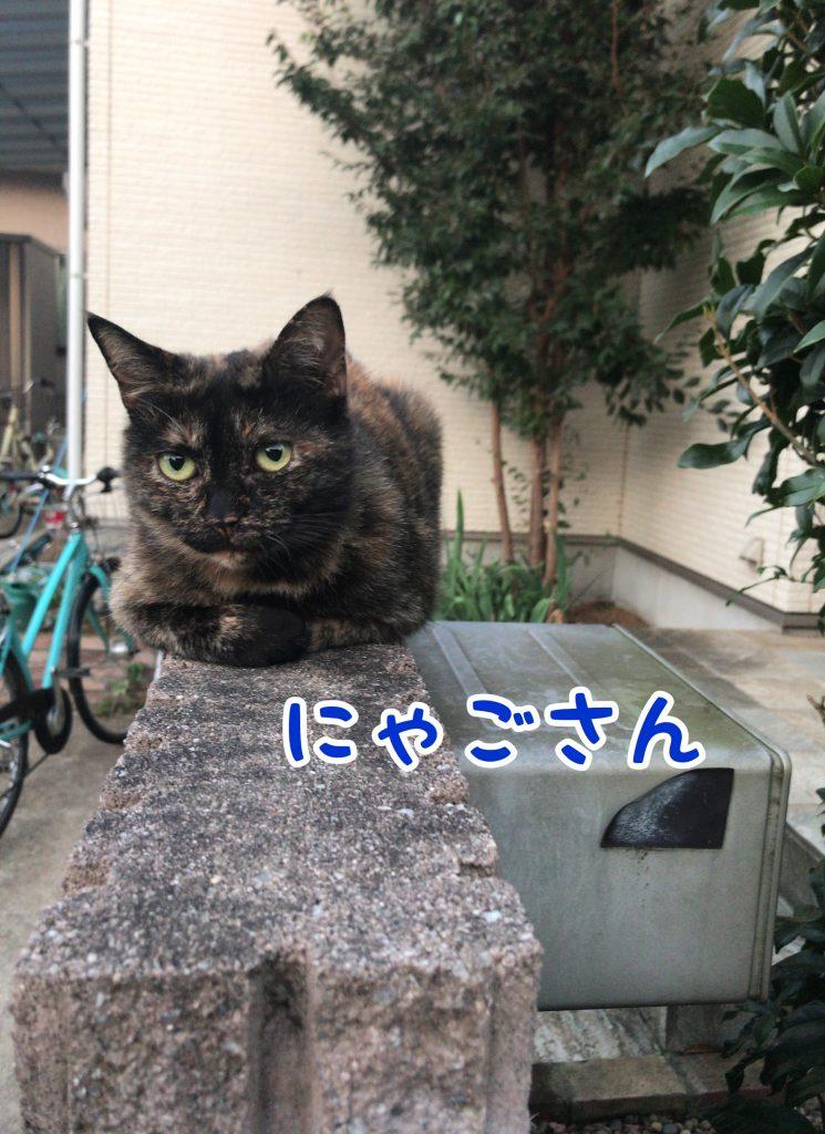 塀の上からこっちを見ている猫さん