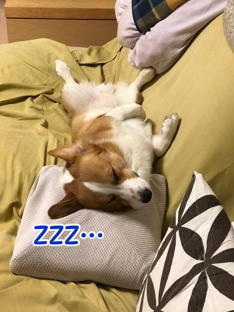 熟睡中のはるさん