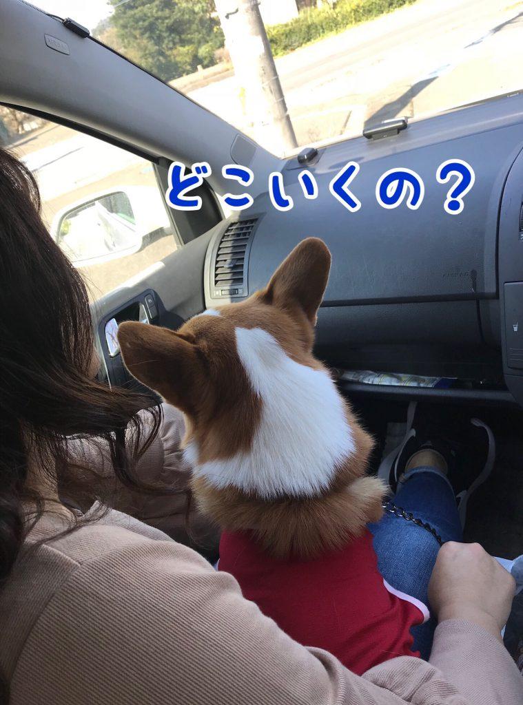 ん?どこいくの?
