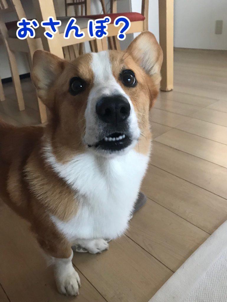 お散歩行くの?