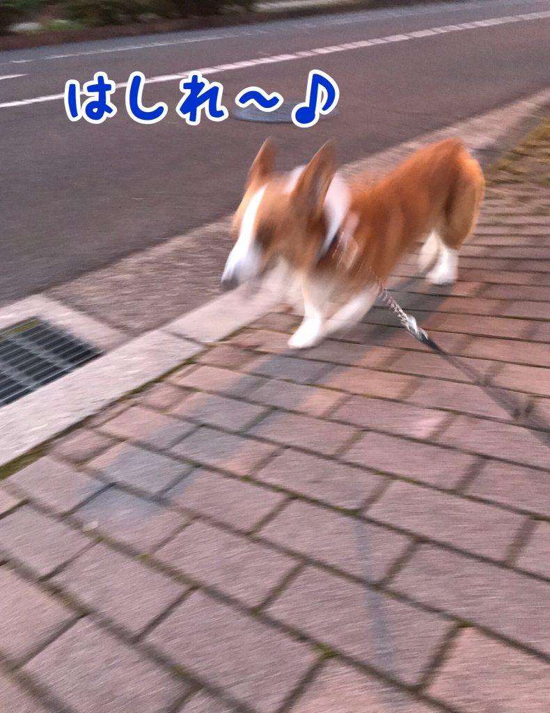 走れ〜!!!