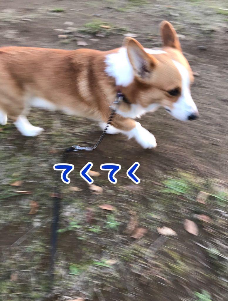 テクテクお散歩開始でし