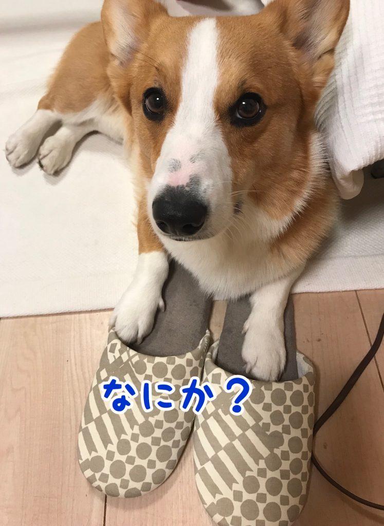 何かご用ですか?