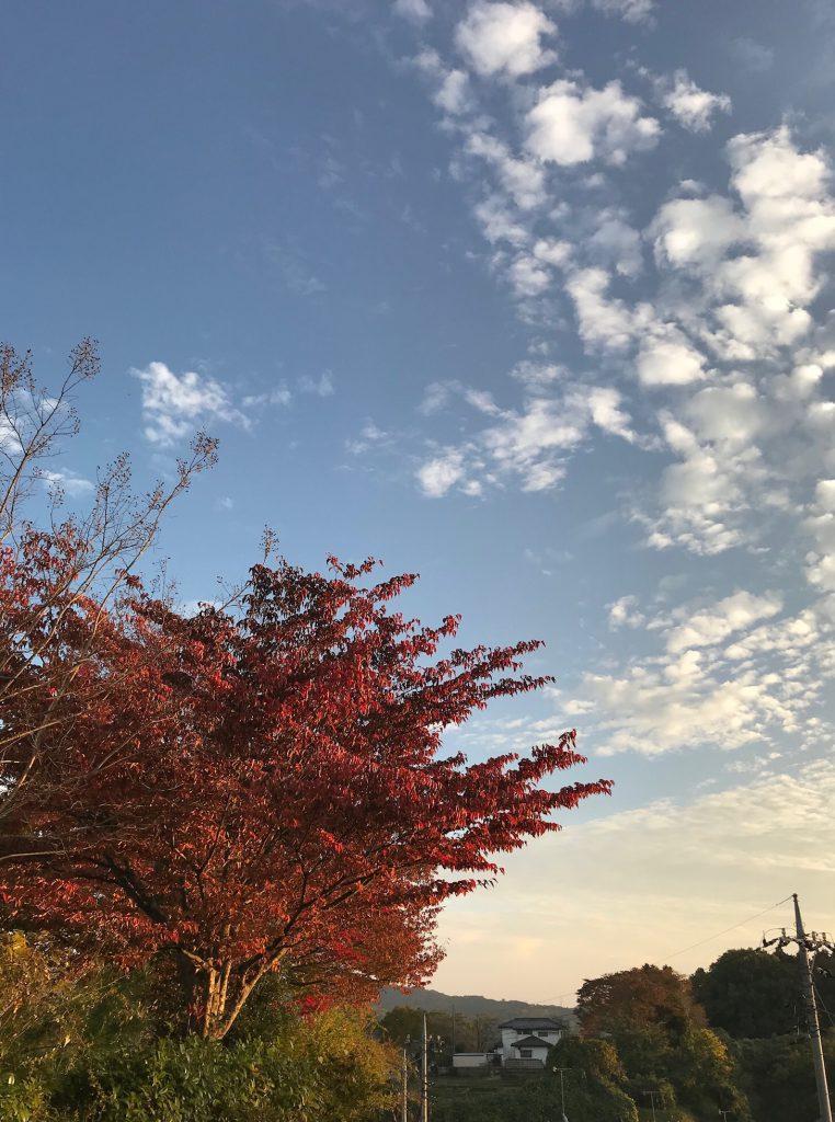 紅葉が綺麗に色づいてました